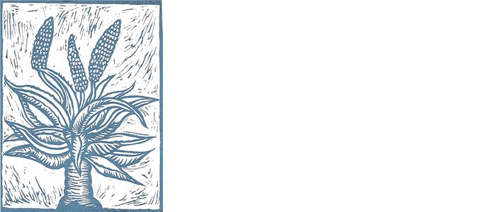 Solana Succulents