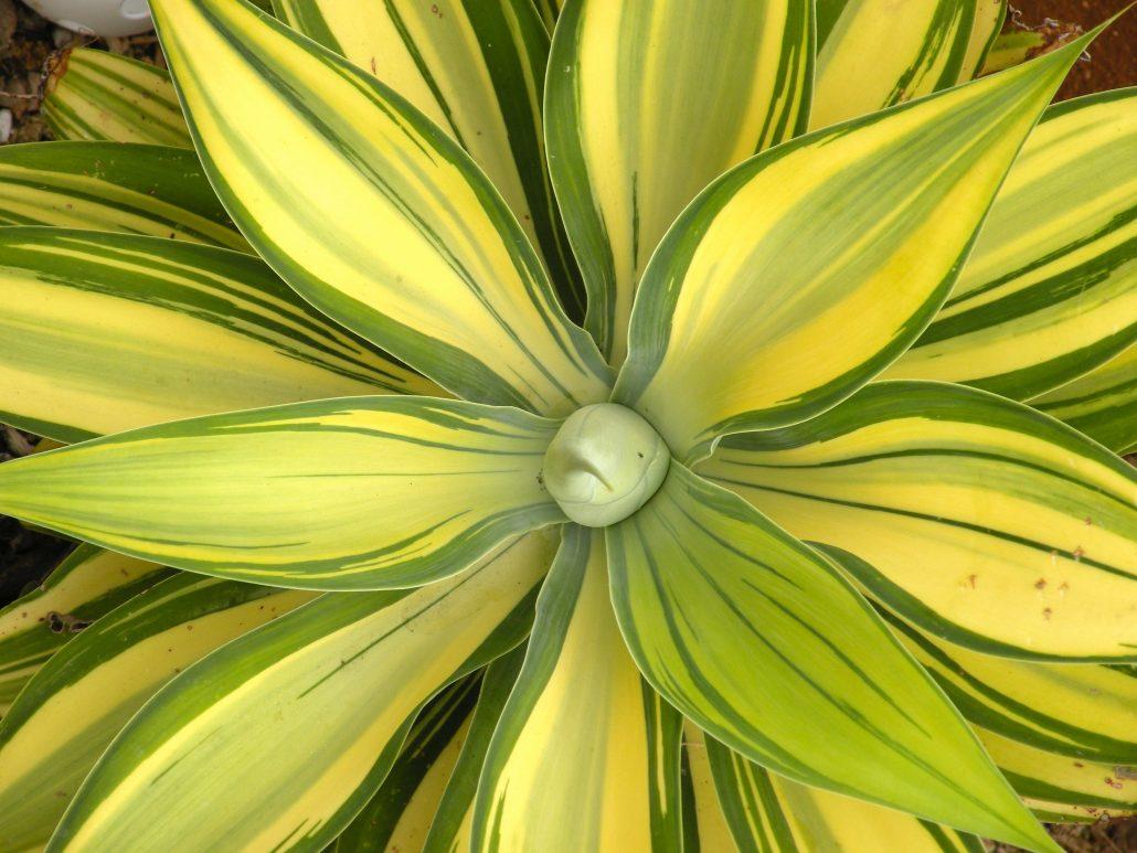Solana Succulents – Succulent Nursery in Solana Beach, CA