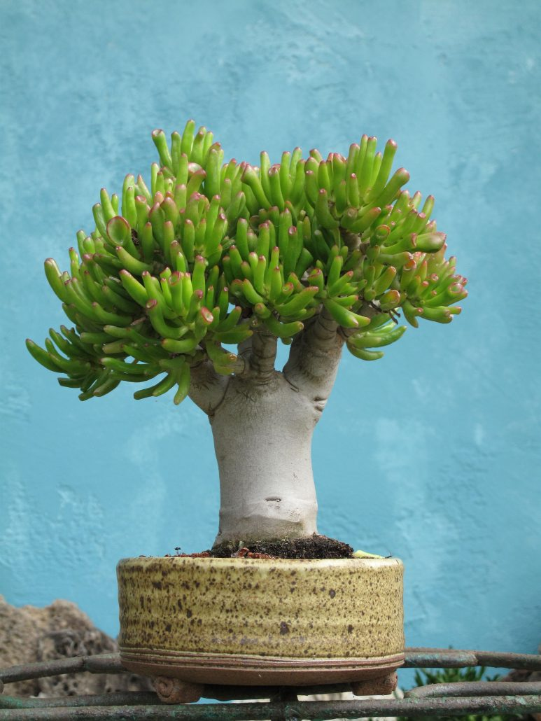 Solana Succulents Succulent Nursery In Solana Beach Ca