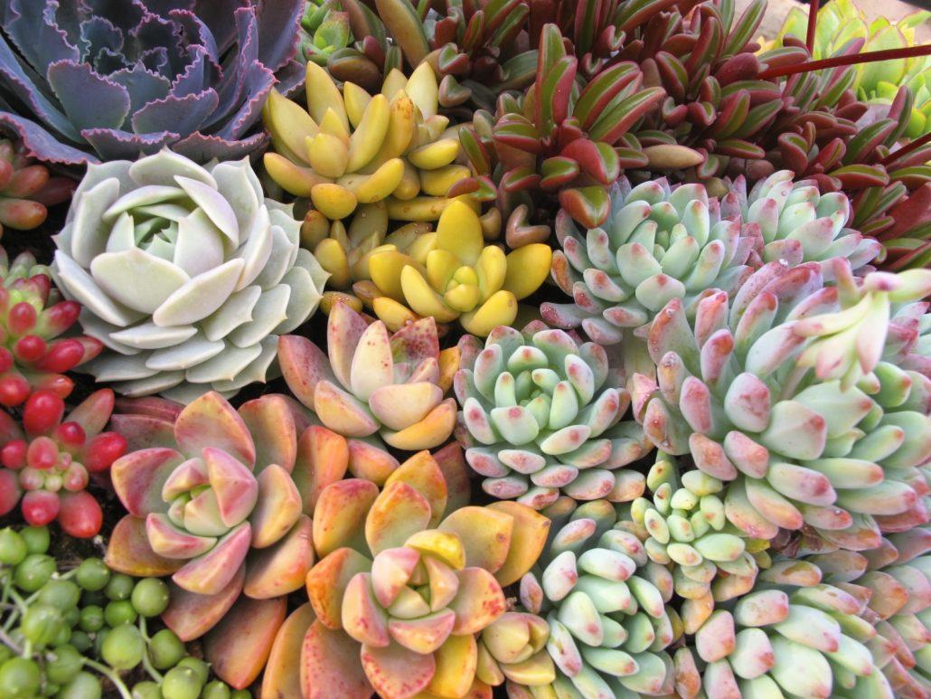 Succulent Nursery In Solana Beach Ca
